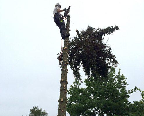 bslp.dk fælder træer hver dag