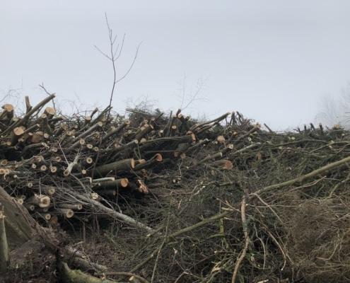 træbeskæring