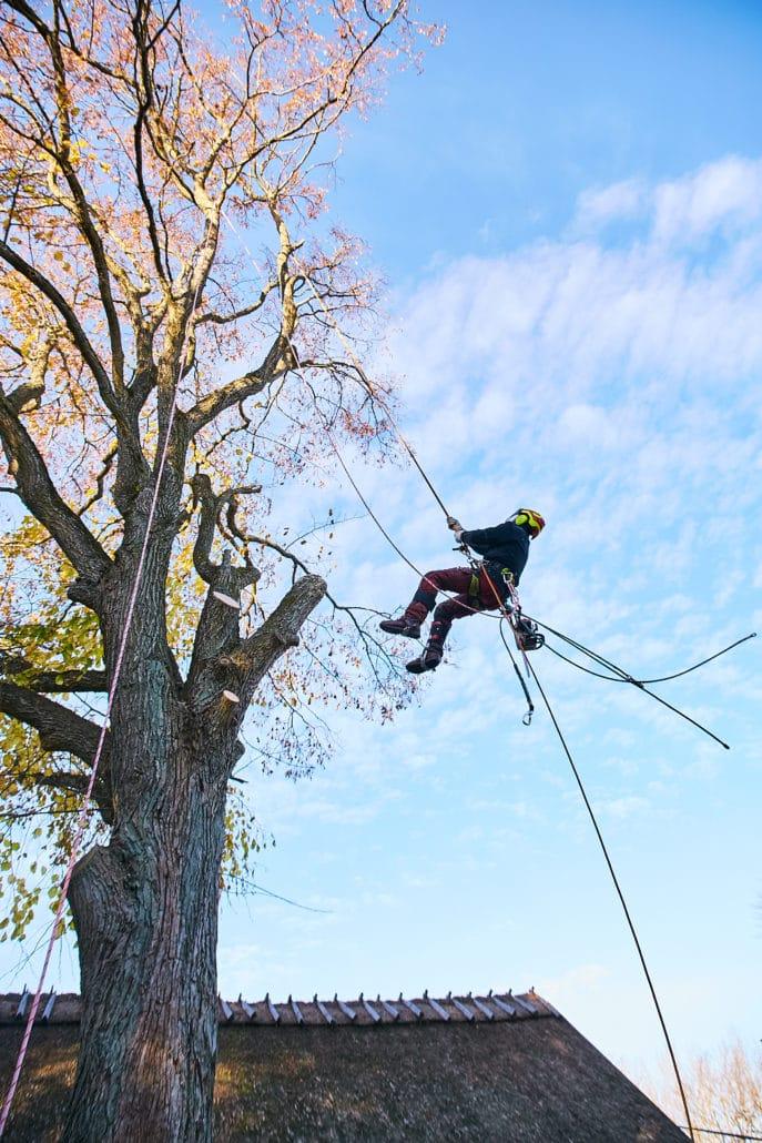 bslp.dk sørger for fældning af dine træer