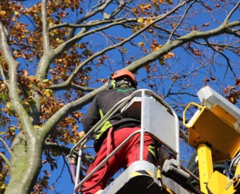 Billig og professionel træfældning fra BS Landskabspleje