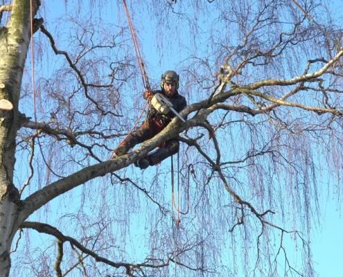 træbeskæring bslp