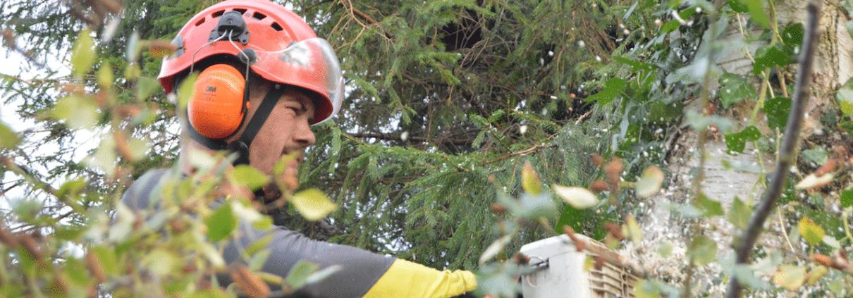 Professionel træbeskæring udføres fra bslp.dk i Helsingør