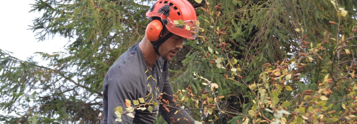 Professionelle træbeskæringer i Gilleleje