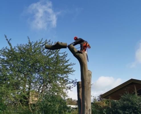 Træfældning fra BS Landskabspleje. Få fældet dit træ i dag